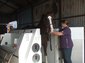 The Equine Spa at Chescombe Farm